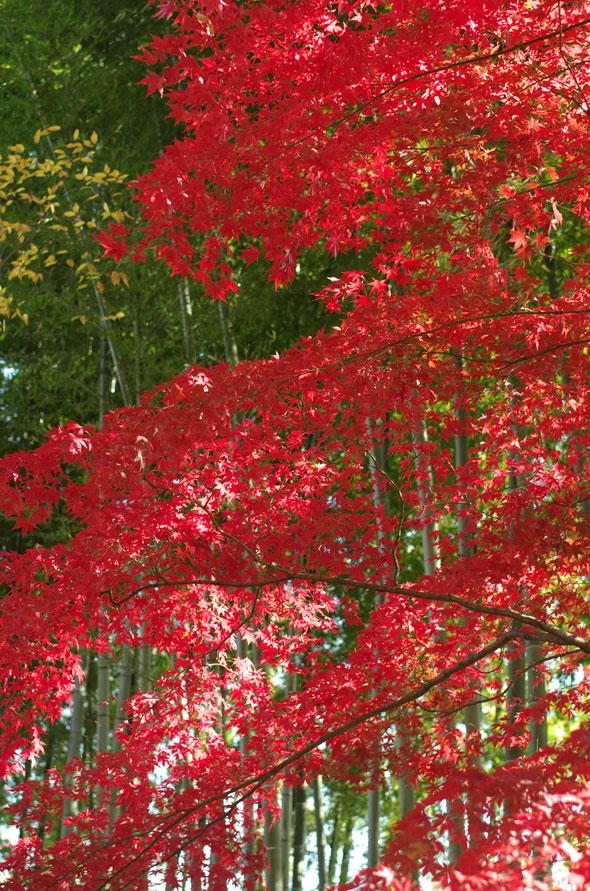 鈴鹿峠の紅葉