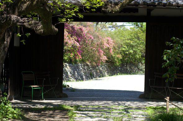 ツツジ - 武相荘