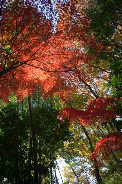 武相荘の紅葉 2017年12月