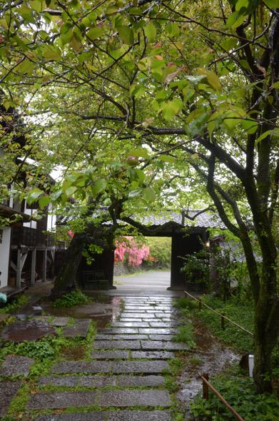雨_紅梅の実