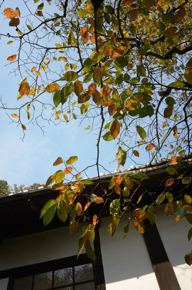 柿の葉 武相荘