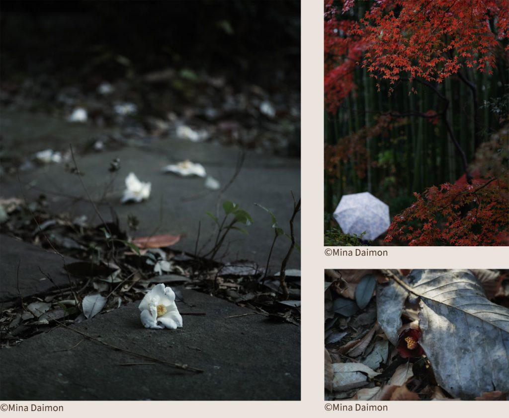 © Mina Daimon 武相荘写真歳時記 秋冬編より