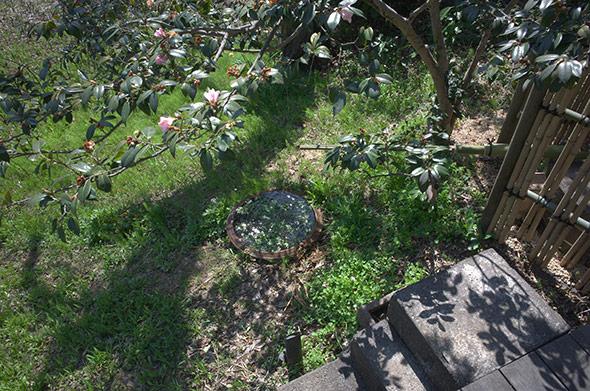 春の訪れ 武相荘