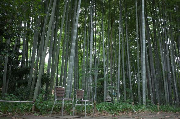 武相荘の竹林